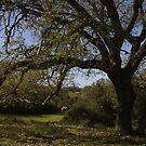 under tree by gaddi s