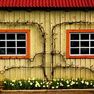 Garden Windows! by georgiaart1974