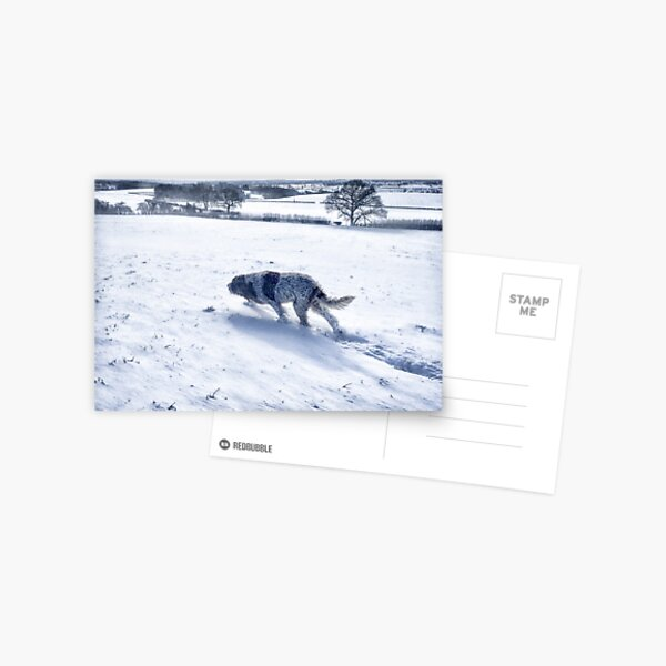 Snow blizzard Spinone  Postcard