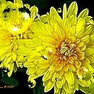 Bright Yellow by Pat Moore