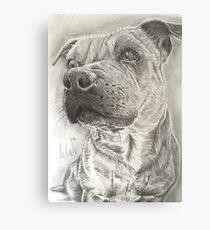 Staffy Canvas Print