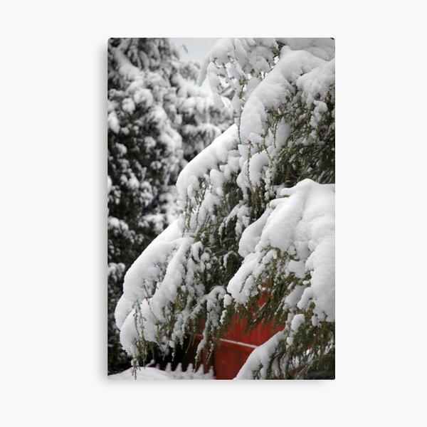 Snow at Rest - 2 Canvas Print