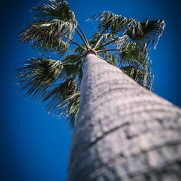 Palm Tree – Mallorca / Majorca by lesslinear