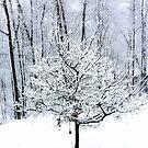 One Tree by Diane  Marie Kramer