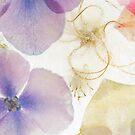 Hydrangea in Ice - 4 by Ann Garrett
