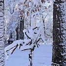 Sculpture tree in snow by Diane  Marie Kramer