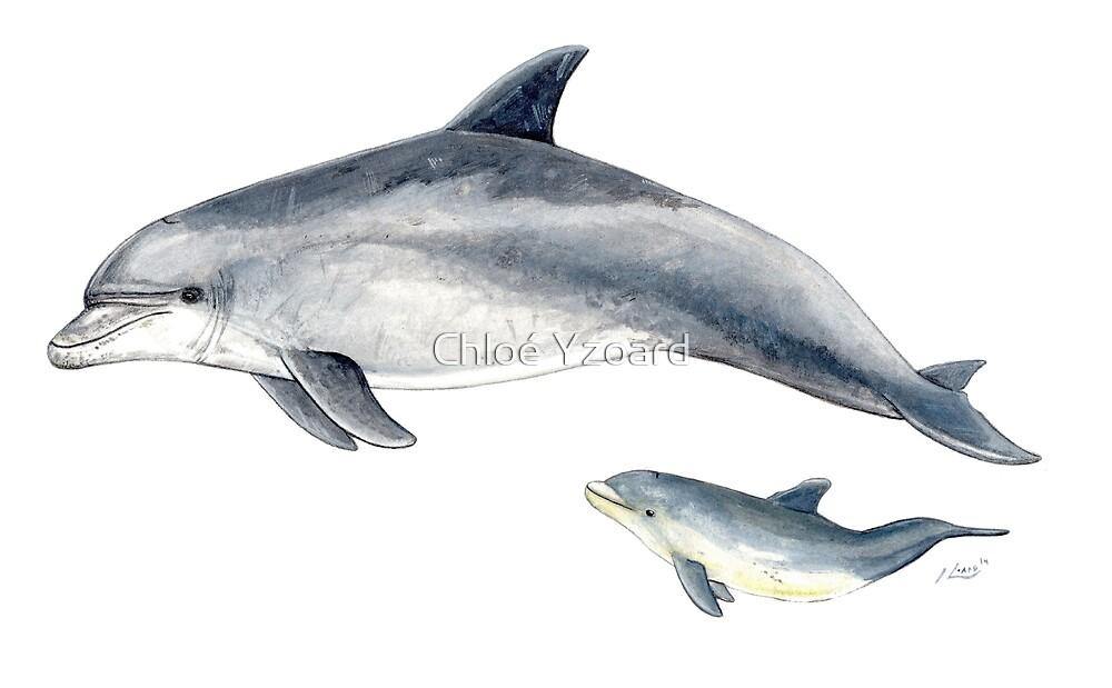 Bottlenose dolphin by Chloé Yzoard