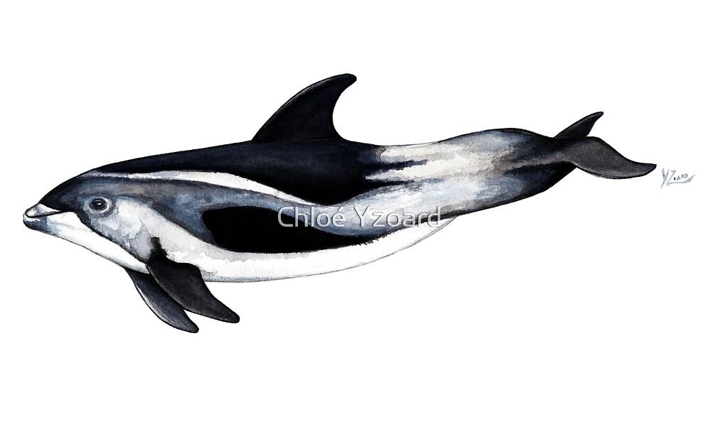 White-beaked Dolphin by Chloé Yzoard