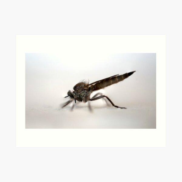 Fliege Kunstdruck