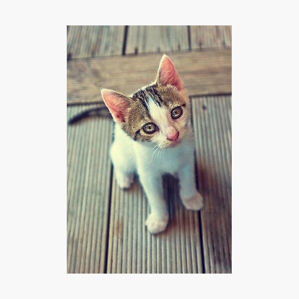 Kleine Katze Fotodruck