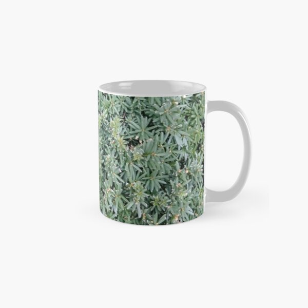 Bush, woody plant, New York, Manhattan, Brooklyn, New York City, architecture, street, building, tree, car, pedestrians, day, night, nightlight, house, condominium,  Classic Mug