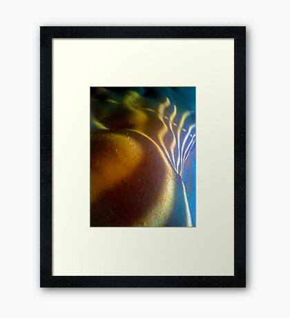 venetian form in colour Framed Print
