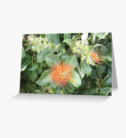 Queensland Native Flower Greeting Card