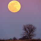 Full Moon at Dusk  by lorilee
