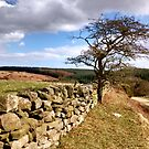 Maybecks-North Yorkshire Moors by apple88