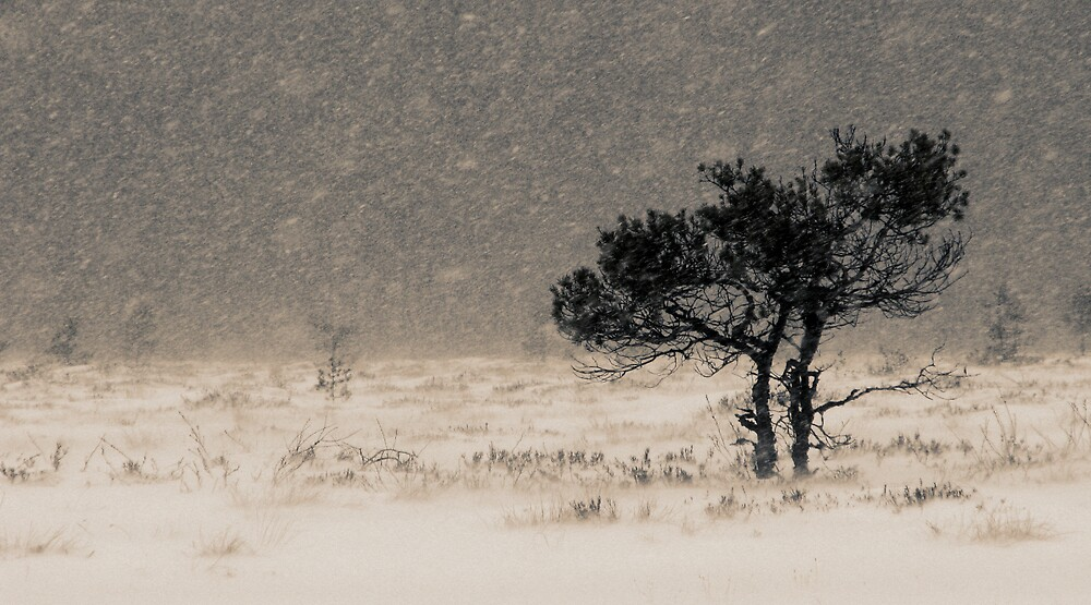 'Under the Snowstorm II' by Petri Volanen
