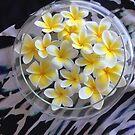 Frangipani flowers by Robyn Williams