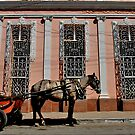 Cuban Horse  by dragonflyblue