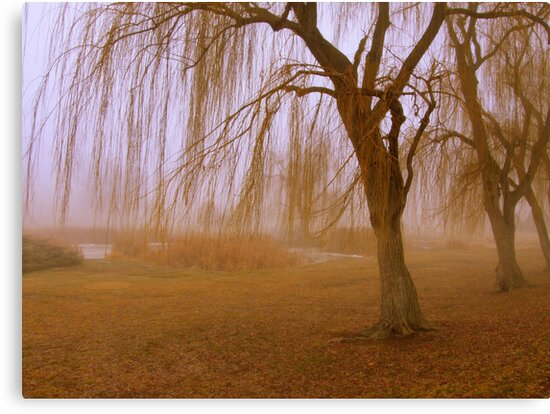 Winter Willows by Cricket Jones