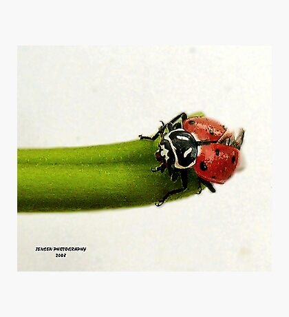 Little Miss             ( LadyBug Series ) Photographic Print