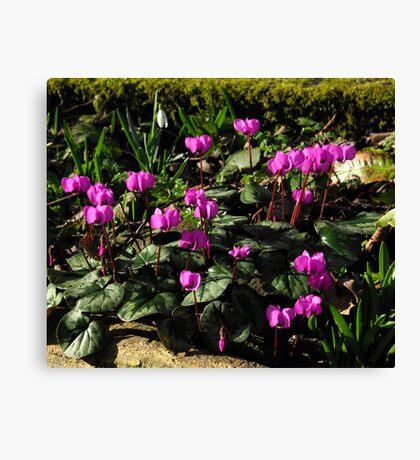 Is Spring On The Way #2 Canvas Print