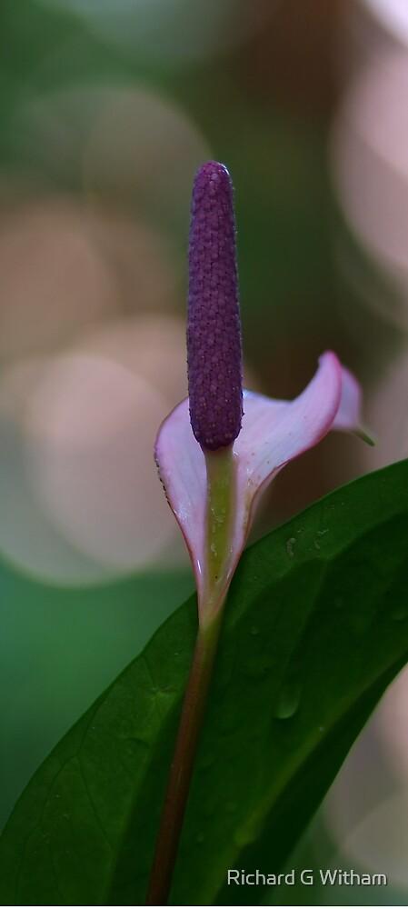 Purple Blur by Richard G Witham