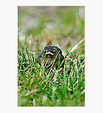 (Winter) Wren In The Grass Photographic Print