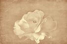 Sepia Rose by Elaine Teague