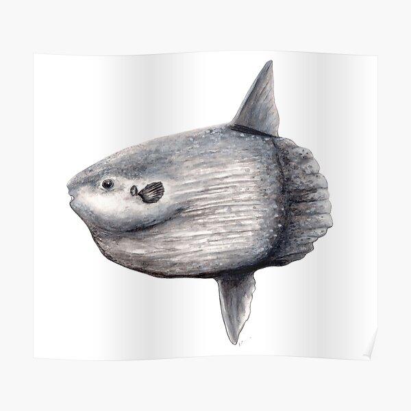 Ozean Sonnenfisch (Mola Mola) Poster