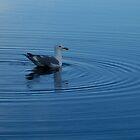 Blue Gull by Al Williscroft