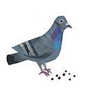 « Le Pigeon » par Mireille  Marchand