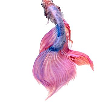 Colored Fish by zeke2usher