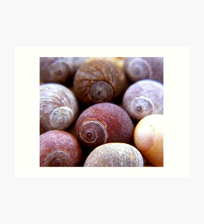 cluster of shells Art Print