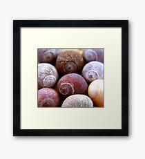 cluster of shells Framed Print