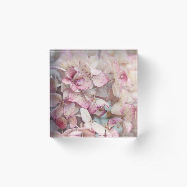 Vintage Hydrangea Acrylic Block