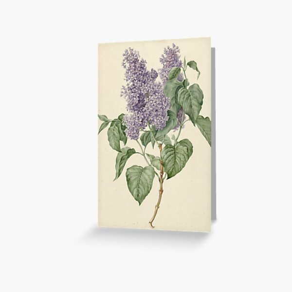 Lilac Botanical Print Greeting Card
