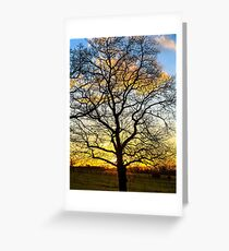 Oak tree silhouette in a golden winter sunset Greeting Card