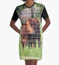Cow Beyond the Fence Graphic T-Shirt Dress