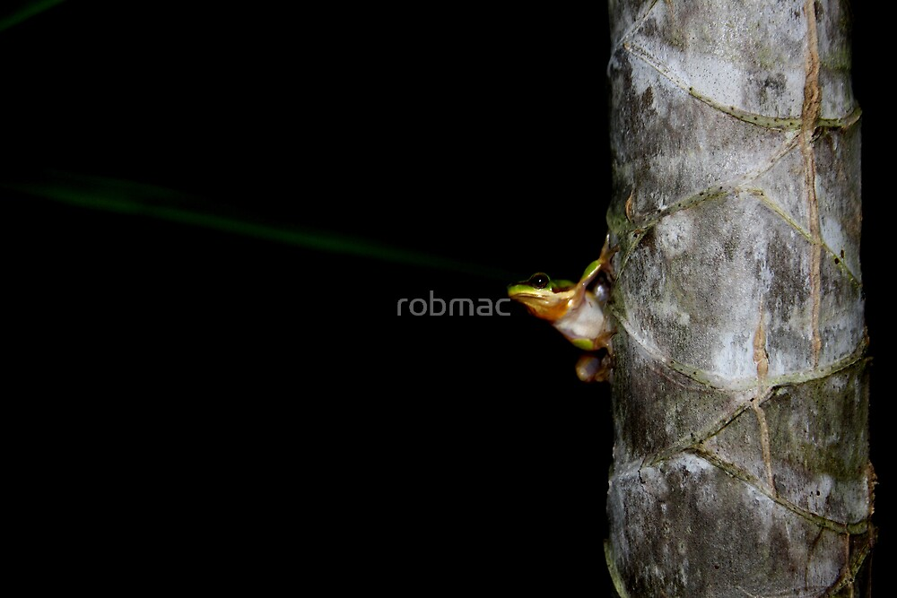 Lazer beam me up froggy by robmac