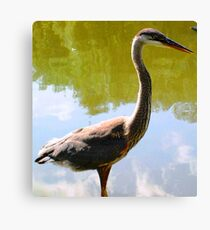 Beautiful bird... Canvas Print