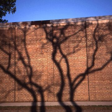 Tree Shadow, Parramatta, Australia 2002 by muz2142