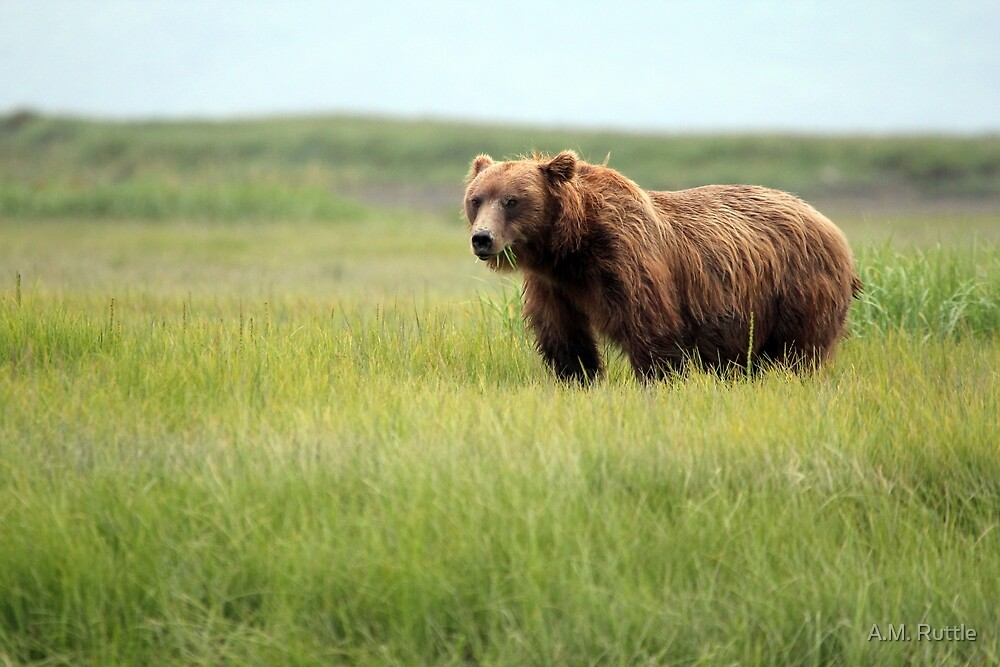 Walking With the Brown Bears in Hallo Bay by A.M. Ruttle