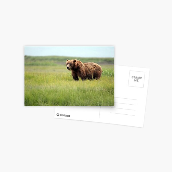Walking With the Brown Bears in Hallo Bay Postcard