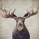 Moose by retrolovephoto