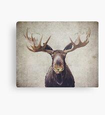 Moose Metal Print