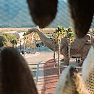 Cabazon Dinosaur Jaw View by Steven Newton