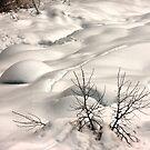 Winter's Blanket by Barbara  Brown