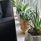 Succulent Sun by Emjonesdesigns