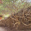 Mangroves  by Natalie Grant