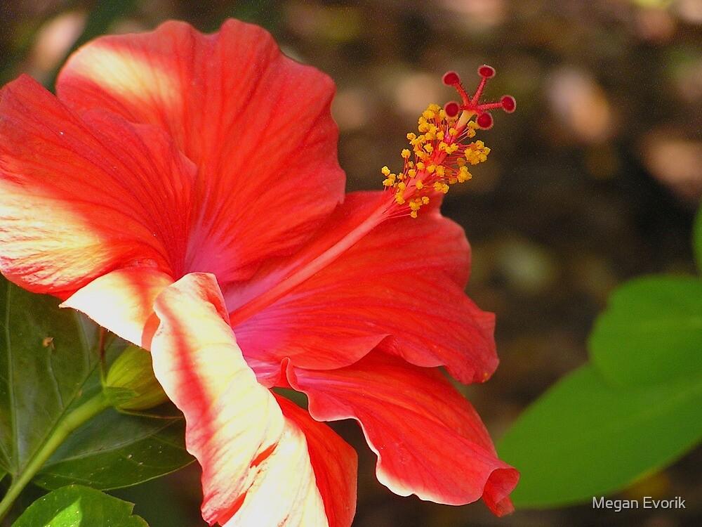 Hibiscus by Megan Evorik